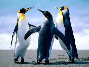 Penguins (2)